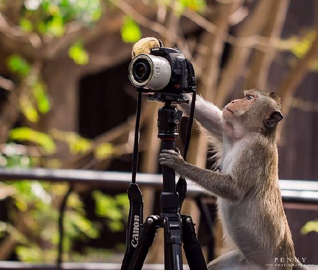 Shangrala's Budding Photographers