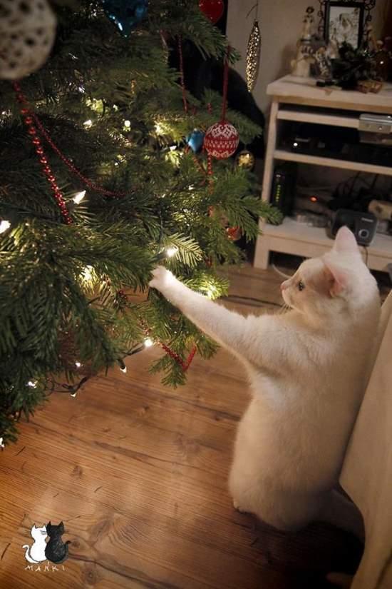 Shangrala's Naughty Christmas Pets