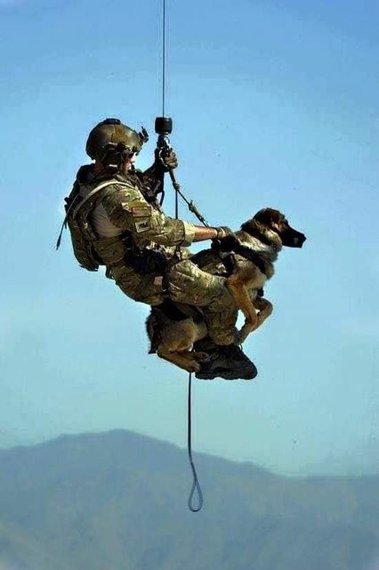 Shangrala's Military Dogs