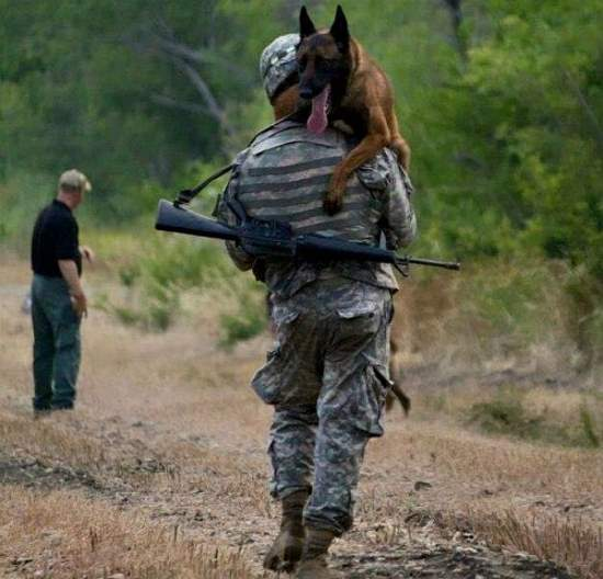 Shangrala's Military Dogs 2