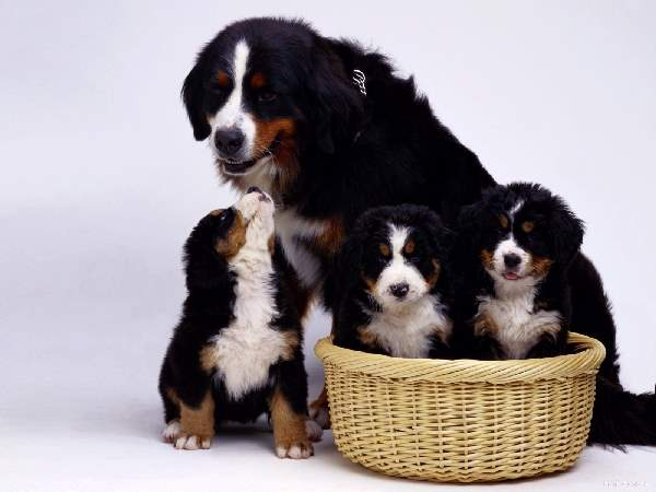 Shangrala's Dog Family Portraits