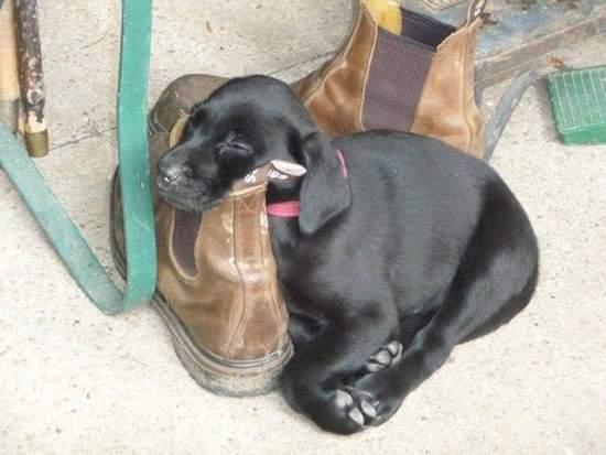 Shangrala's Dog-Tired Dogs 2