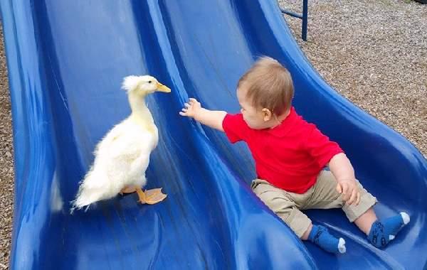 Shangrala's Beaker The Duck