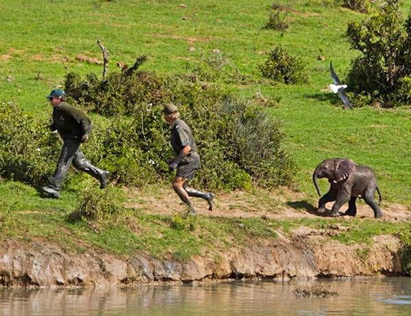Shangrala's Elephant Rescue 4