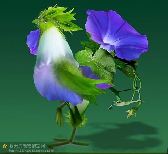 Shangrala's Beautiful Spilling Flowers