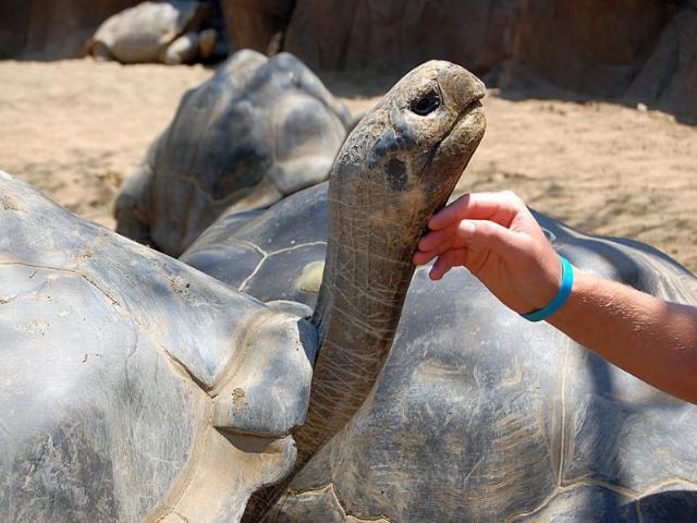 Shangrala's Beautiful Galapagos Islands 2