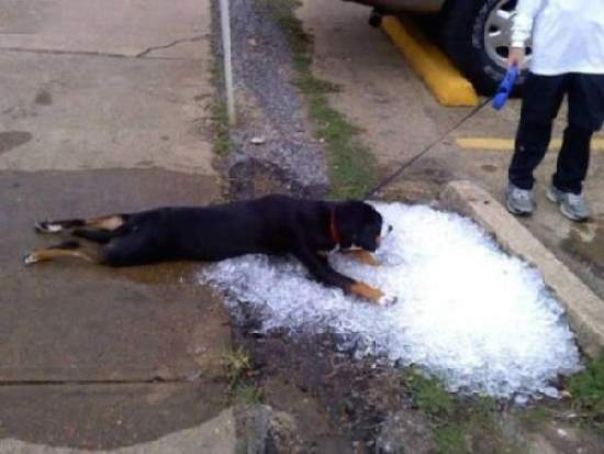 Shangrala's Dog Days Of Summer 2