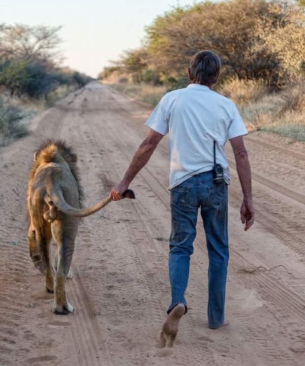 Shangrala's Zion The Lion
