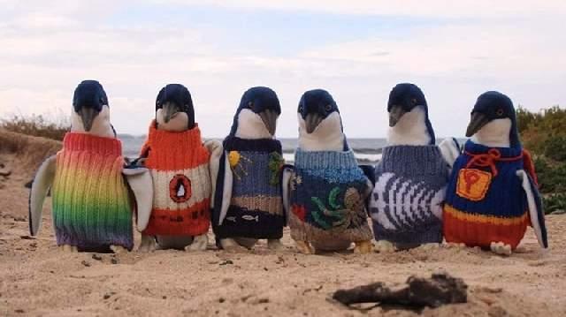 Shangrala's Australian Penguins Rescued