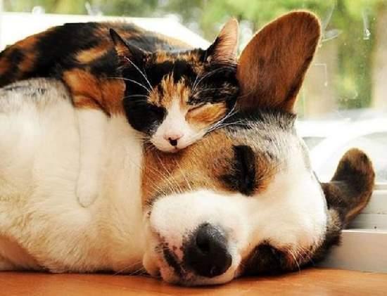 Shangrala's The Best Pillows