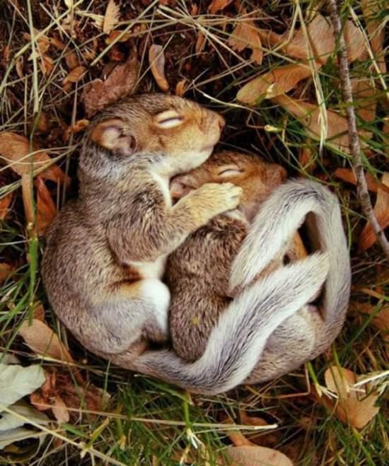 Shangrala's The Best Pillows 2