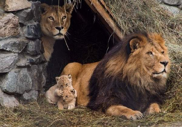 Shangrala's Animal Family Portraits