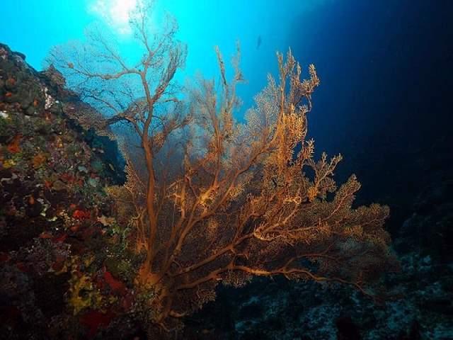 Shangrala's Underwater Life of Eilat