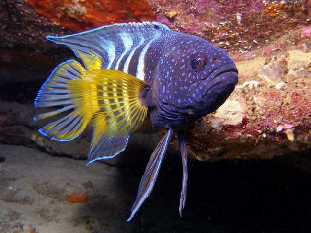 Shangrala's Underwater Life of Eilat 2