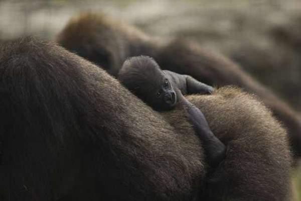 Shangrala's Incredible Wildlife Photos 2