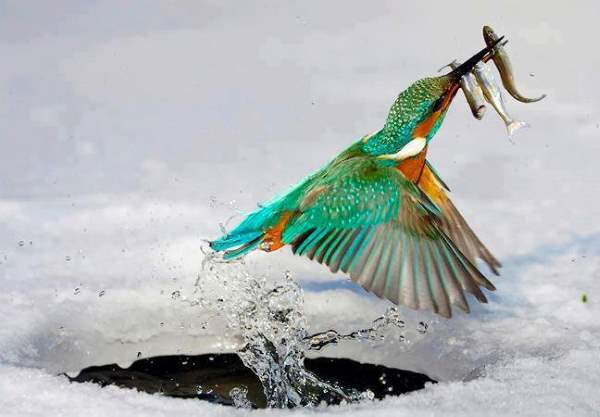 Shangrala's Incredible Wildlife Photos 2