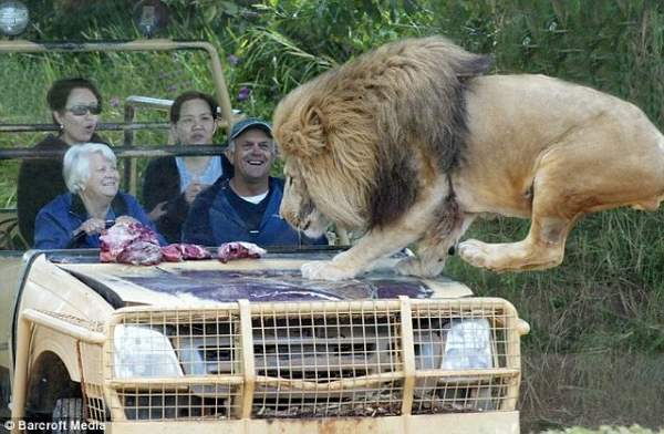 Shangrala's Werribee Open Range Zoo