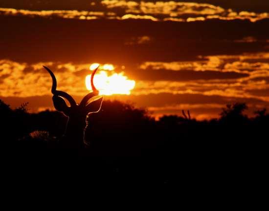 Shangrala's Beautiful Africa
