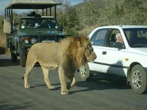 Shangrala's Only In Africa