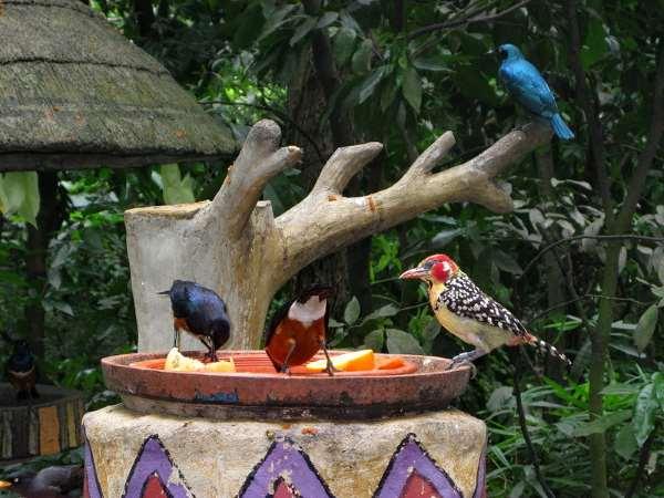 Shangrala's Singapore Bird Park