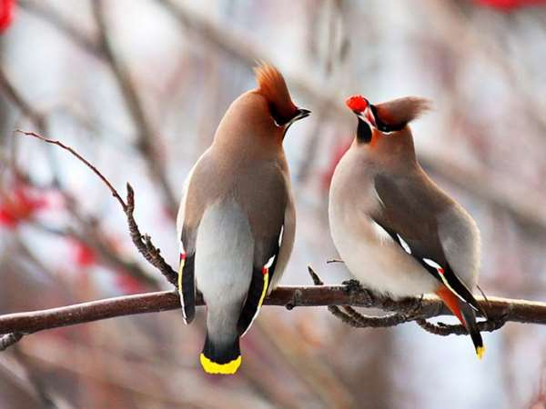 Shangrala's Beautiful Birds And Words