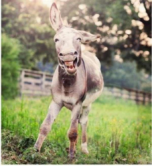 Shangrala's Miniature Donkeys