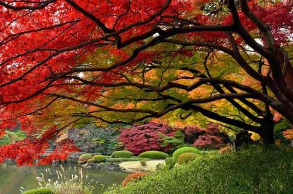 Shangrala's Autumn Around The World 2