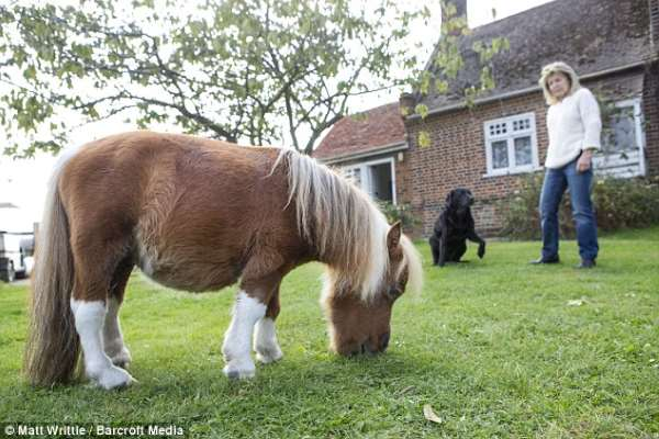 Shangrala's Cute Little Pony