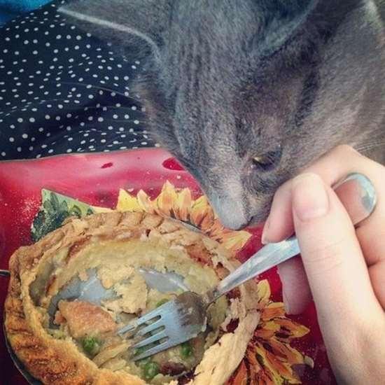 Shangrala's Pets And Food