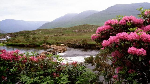 Shangrala's Beautiful Scotland 2