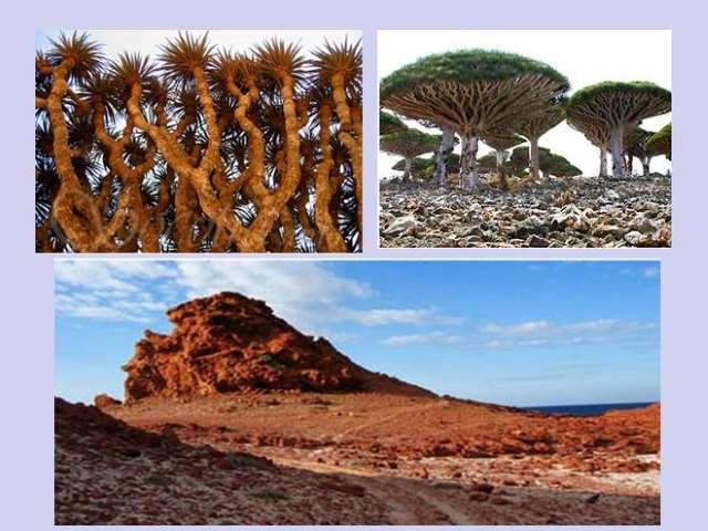 Shangrala's Socotra Island