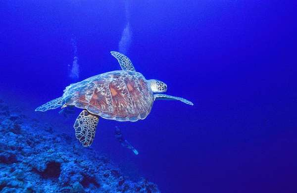 Shangrala's World's Largest Turtle Population