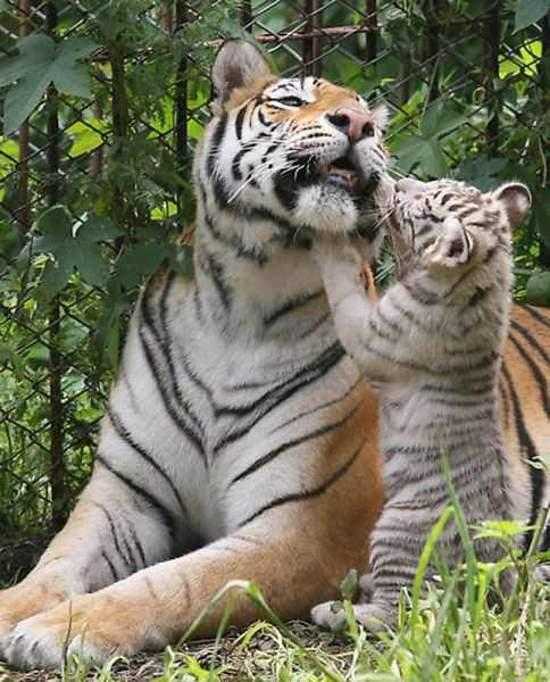 Shangrala's Aww Animals 14