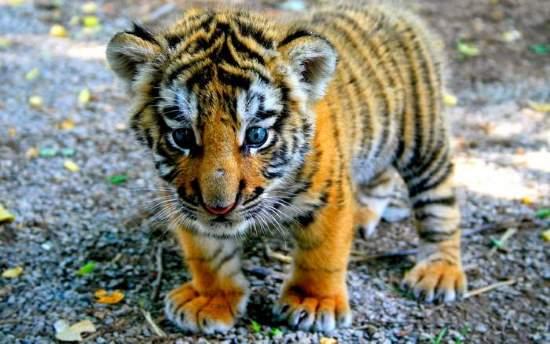 Shangrala's Aww Animals 13