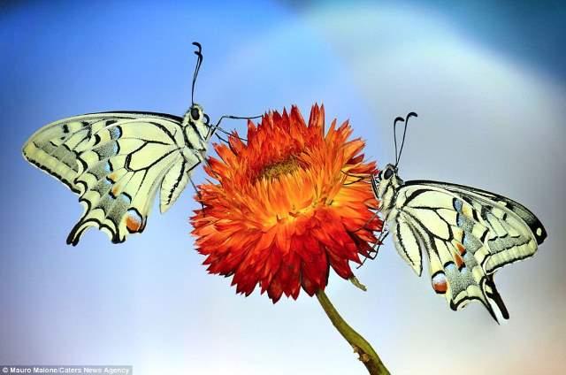 Shangrala's Butterflies And Flowers