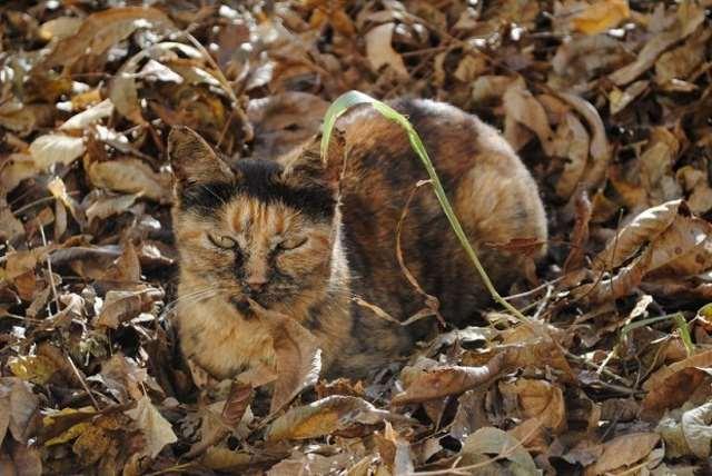 Shangrala's 'Invisible' Animals 2