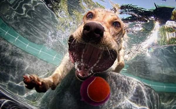 Shangrala's Dog Water Fetch