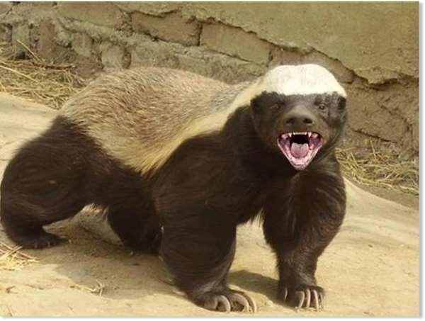 Shangrala's Fearless Animals