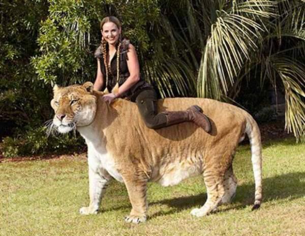 Shangrala's Giant Creatures