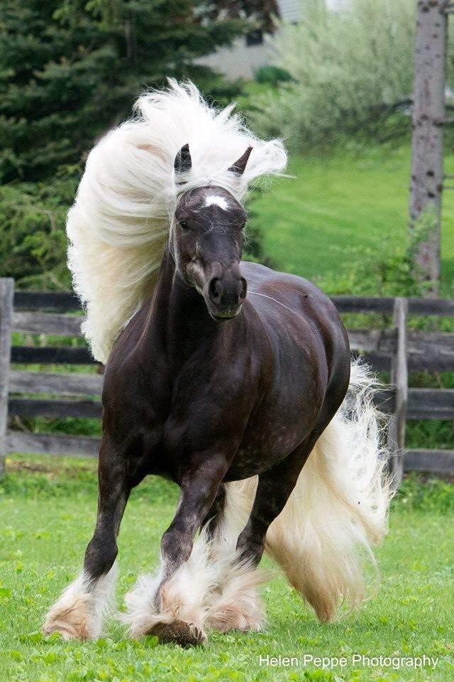 Shangrala's Beautiful Horses