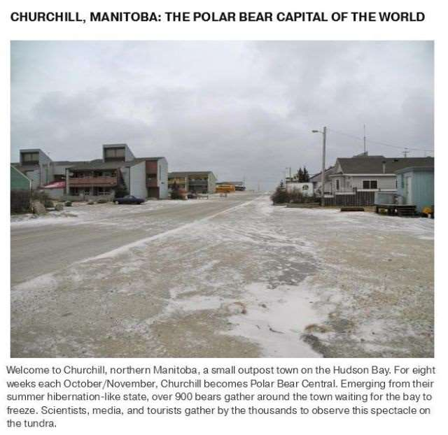 Shangrala's Polar Bear Capital