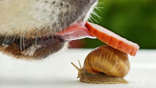 Shangrala's Magical Tiny Snails 2