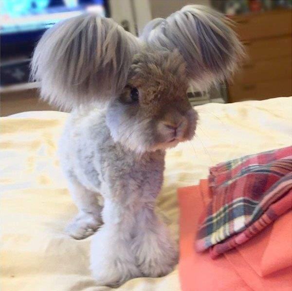 Shangrala's Wally The Rabbit