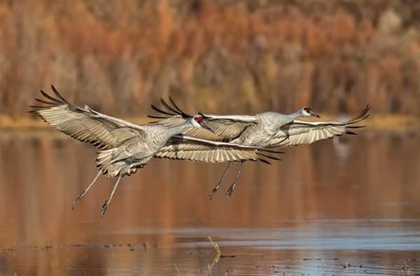 Shangrala's Incredible Wildlife Photos 4