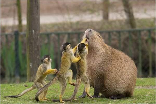 Shangrala's Incredible Wildlife Photos 5