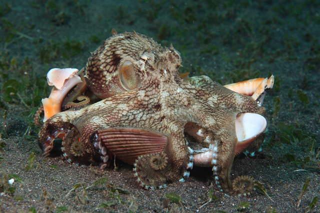 Shangrala's Amazing Underwater Creatures