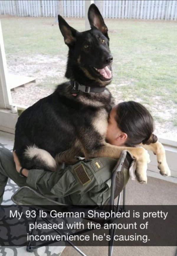 Shangrala's Military Dogs 3