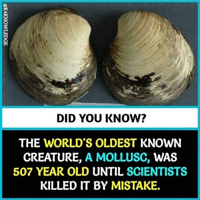 Shangrala's Trivia Facts