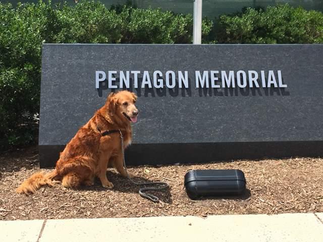 Shangrala's Ricochet At The Pentagon