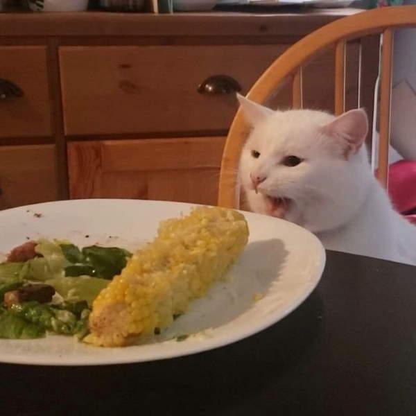 Shangrala's Smudge The Cat